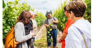 Emeritus Vineyards Wins USA TODAY's Best Winery Tour 2017