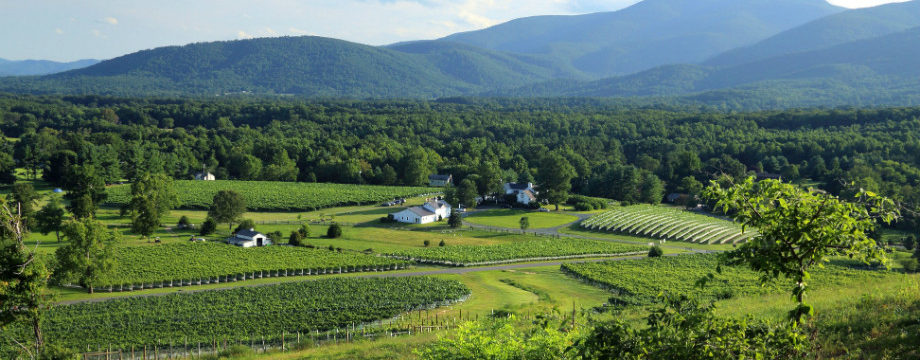 Central Virginia Wine In Pursuit of Excellence