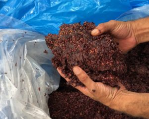 Pressed Red Pomace