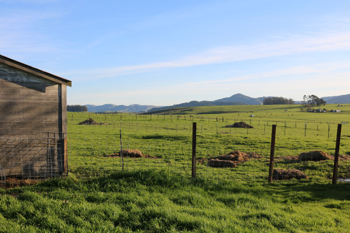 On September 30, 2019, Petaluma Hills Farm, located at Sonoma Hills Farm, was granted the first one-acre conditional use permit for a cannabis grow in Sonoma County.