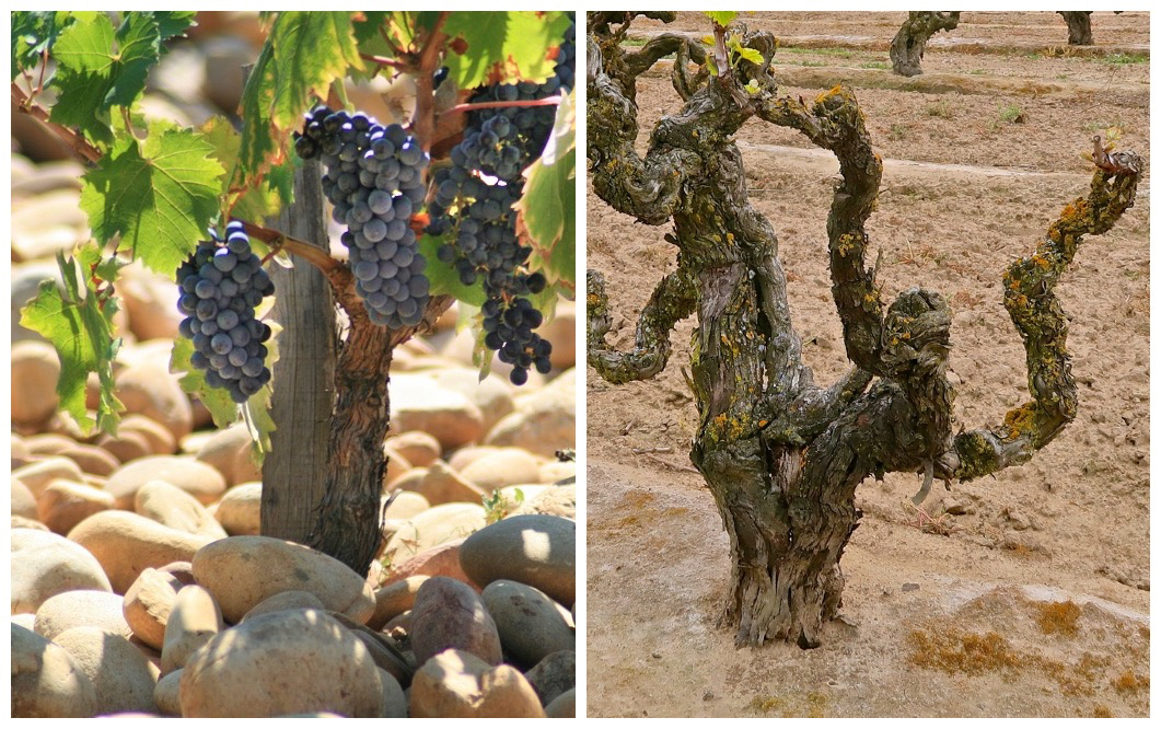 Left: galets in Chateauneuf-du-Pape / Flickr; Right: Lodi's sandy loam soil / Randy Caparoso Photography