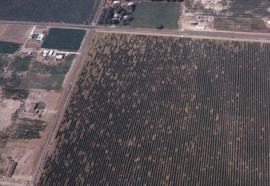 Aerial of vineyard with Pierce's disease_Picture from University of California.)